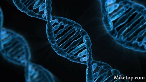 DNA-Analyse – Miketop