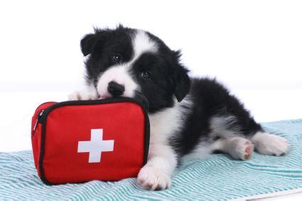 How to Assemble a Canine First Aid Kit