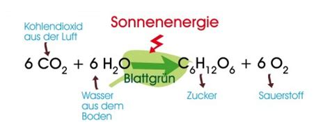 Was ist Photosynthese?   www
